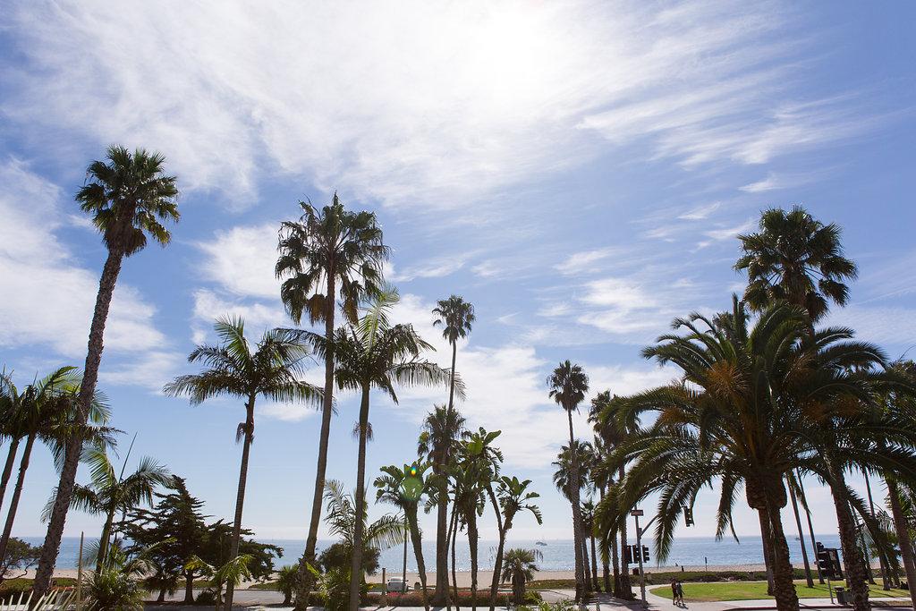 santa_barbara_palm_trees.jpg