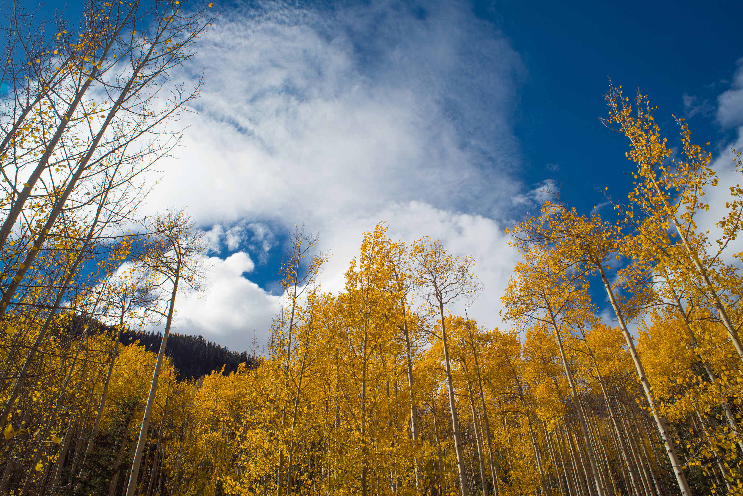 Colorado_Aspens-12.jpg