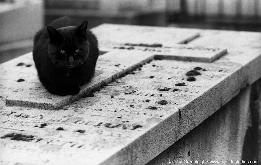 cat_cemetery.jpg