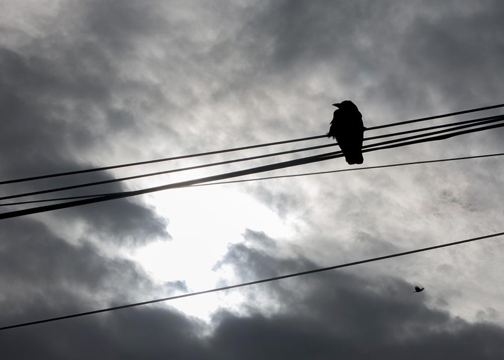 crow_couds_cropped.jpg
