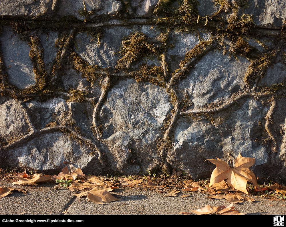 fall_leaf1_lo.jpg