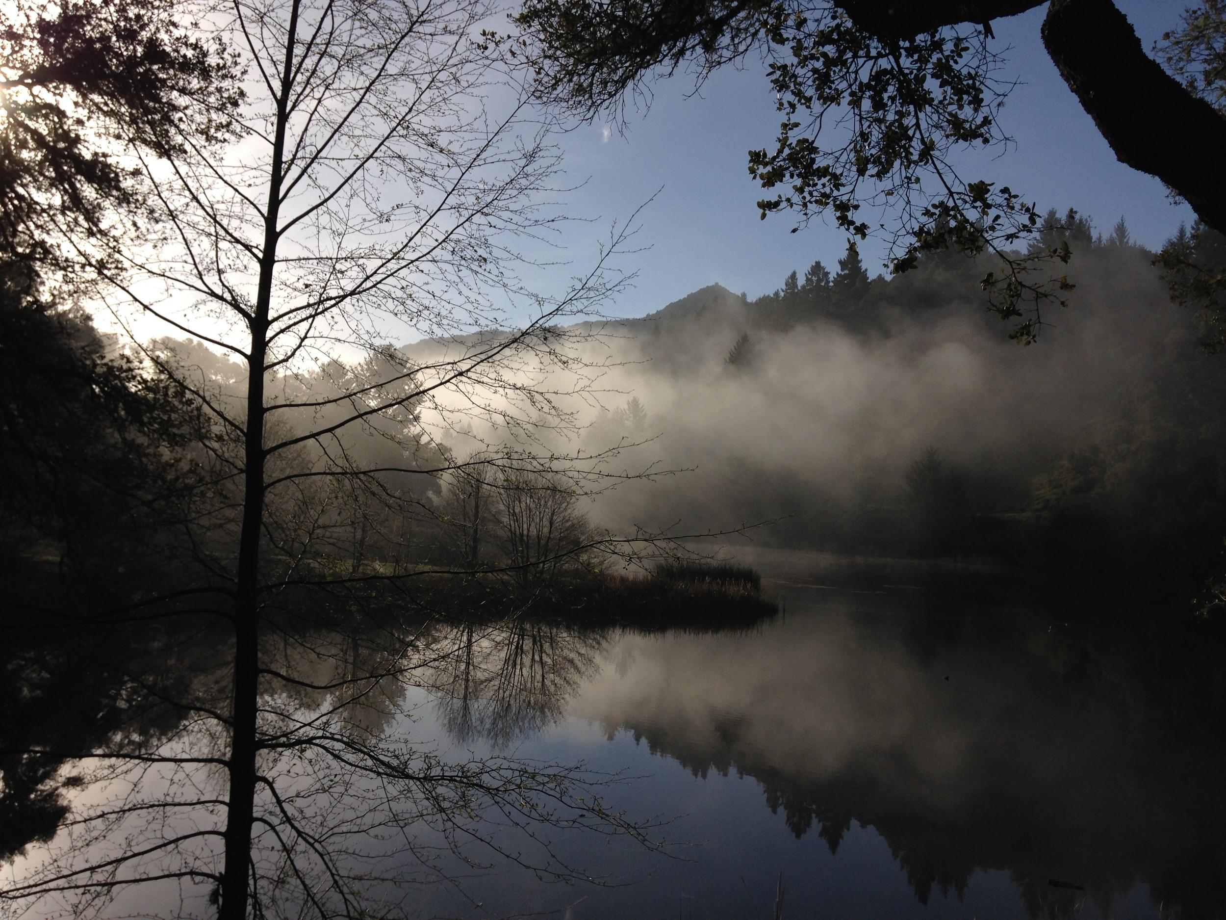 lake_lagunitas_fog.JPG