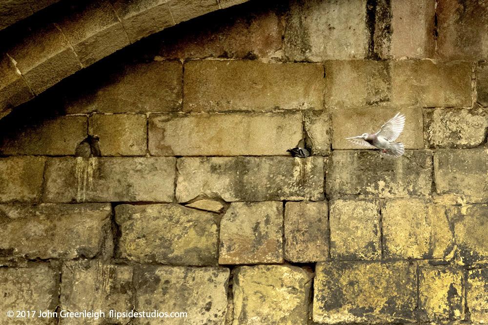 pigeon_roman_wall_lo.jpg