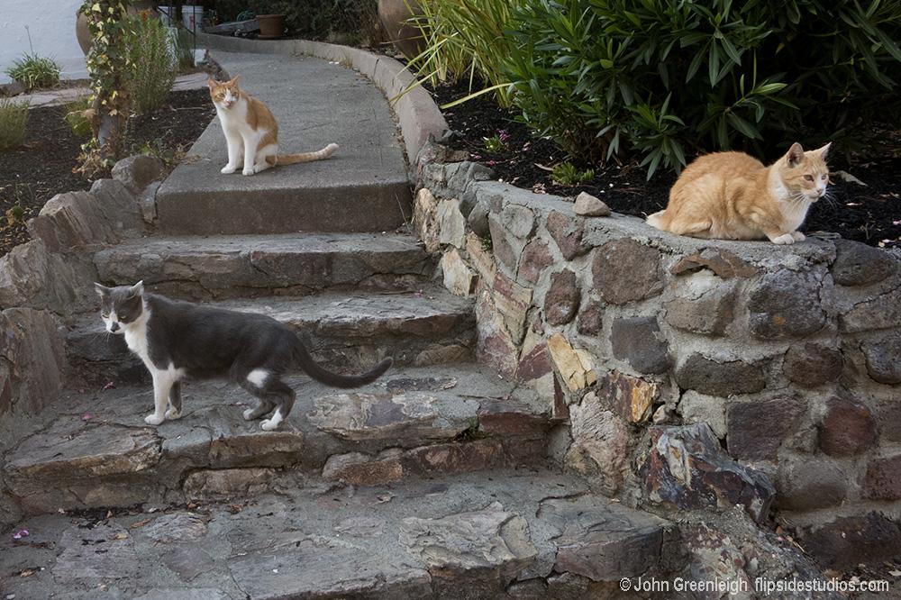 Cats_herrera_lo.jpg