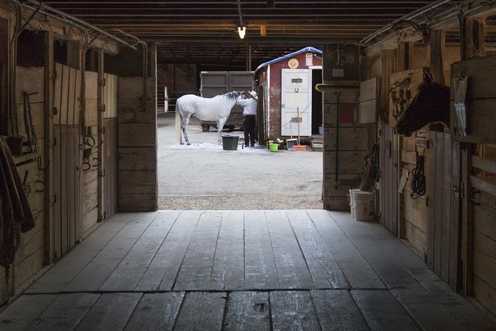horse_groomer_2.jpg