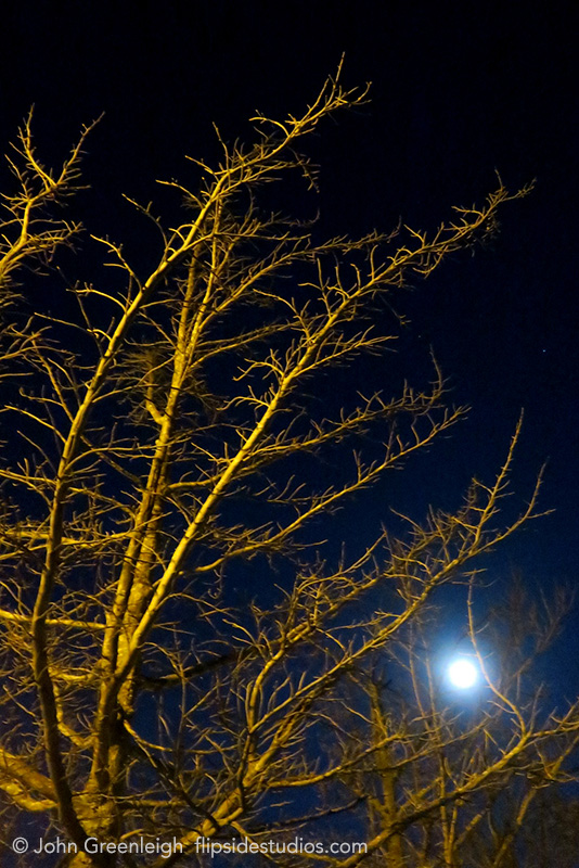 fairfax_night_trees_lo.jpg