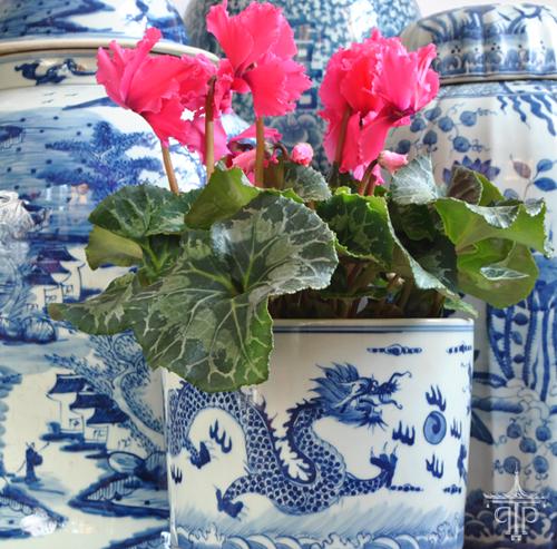 blue+and+white+dragon+planter+cyclamen+500px.png