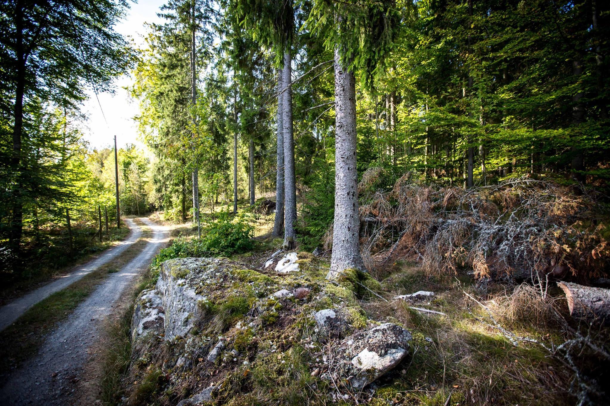 skovenkalder10.jpg