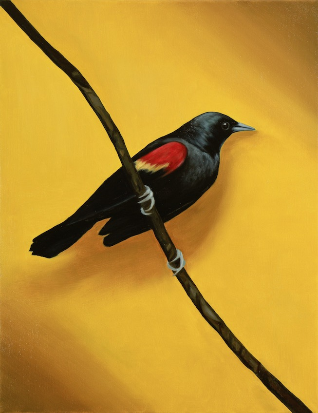 The Quiet Bird, Oil on canvas, 45x35cm, 2019
