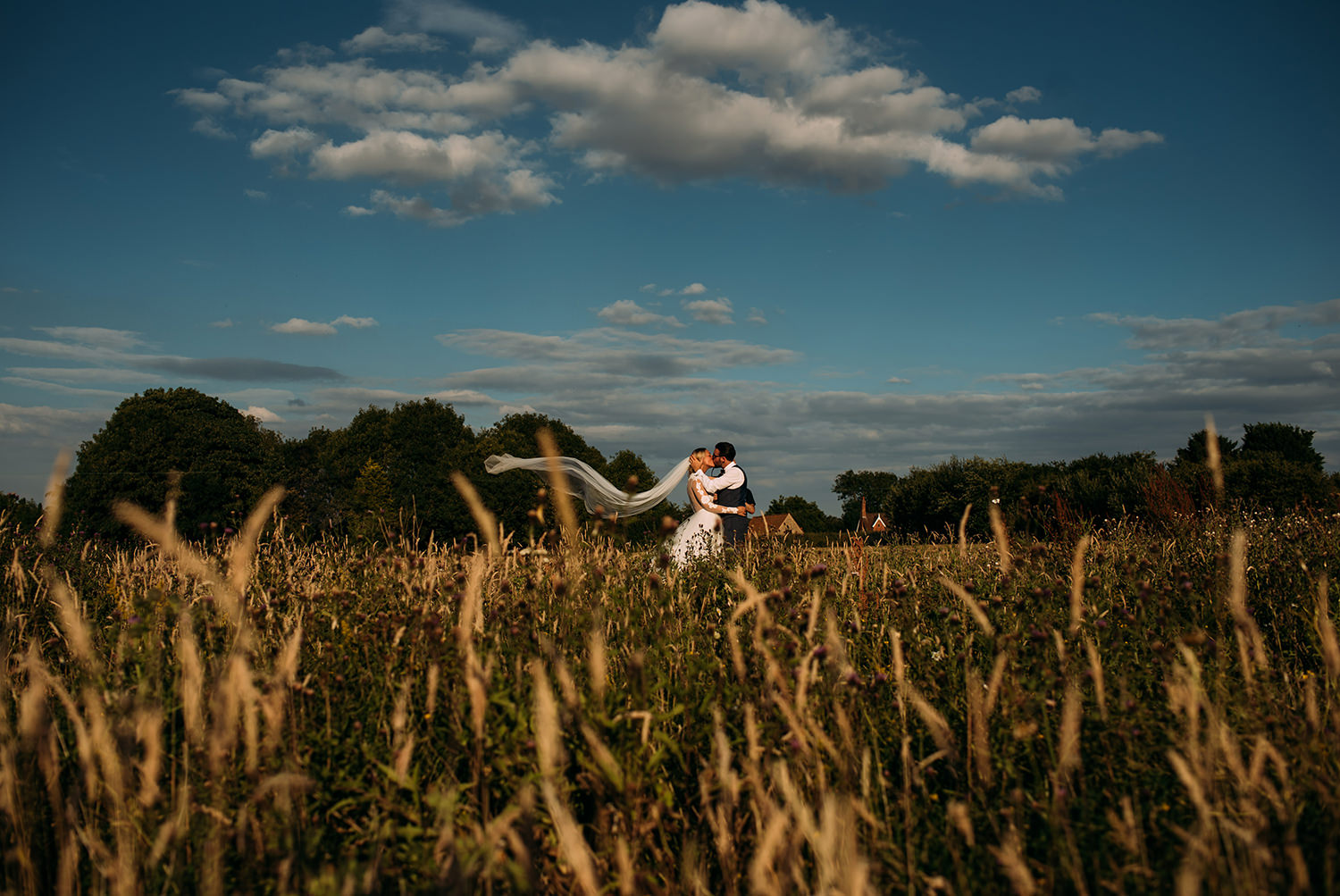 bride and groom kiss in a corn field. The veil blows in the wind