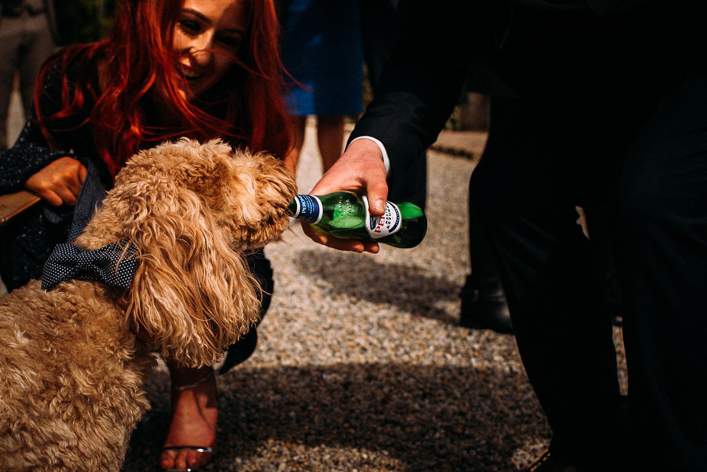 dog drinking beer