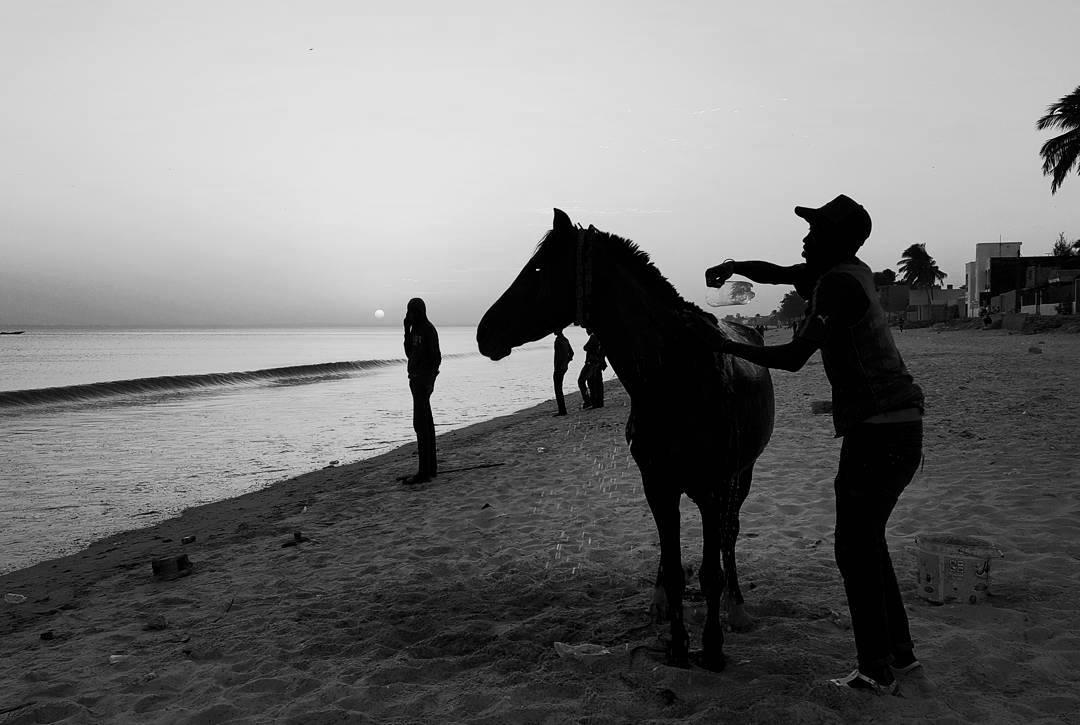 limpiando el caballo en la mer.jpg