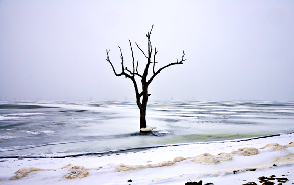 Patrick Emerson: Flickr.com