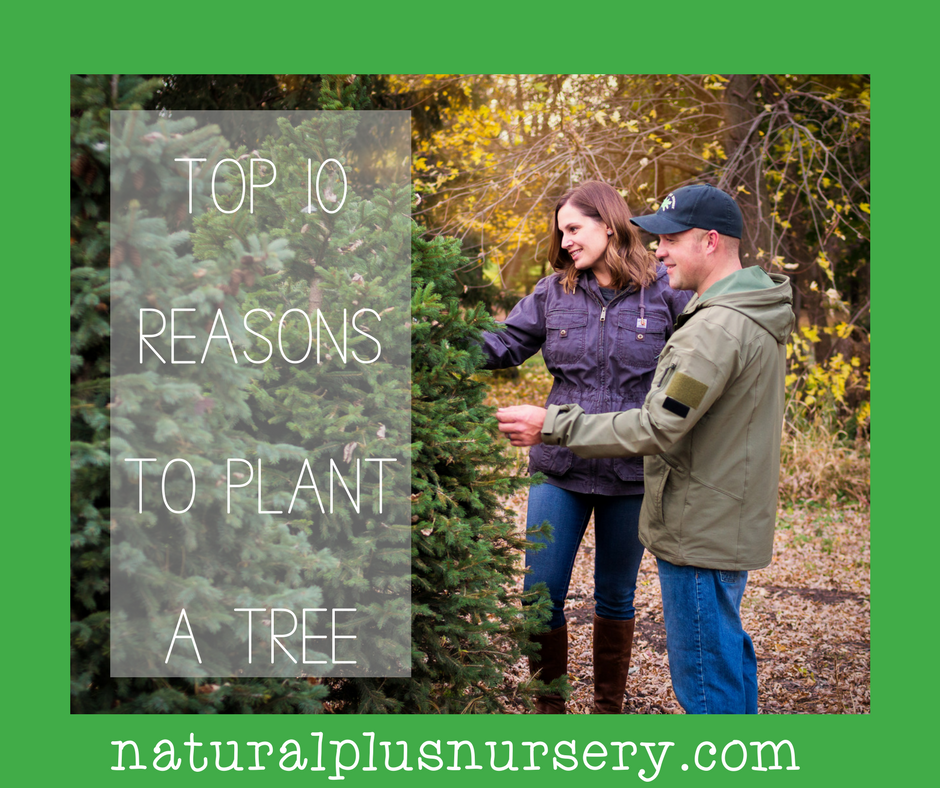 top 10 reasons to plant a tree.png