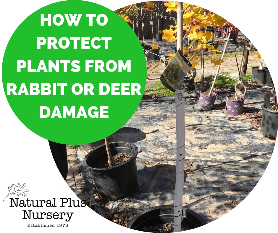 PROTECT PLANTS FROM RABBIT OR DEER DAMAGE (1).jpg