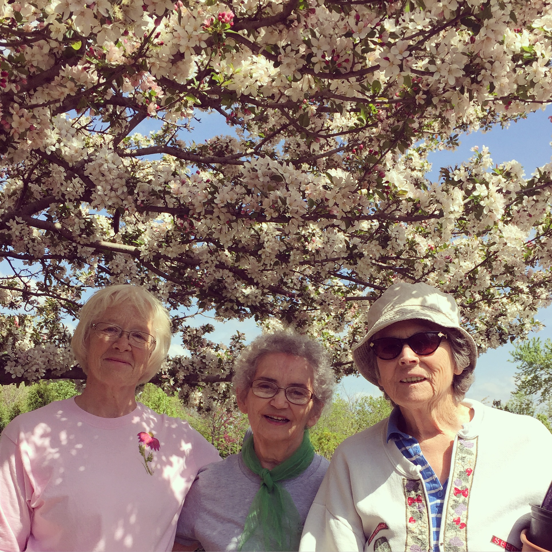 A tina crab in full bloom behind LINDA and neighbors MARY WOERNER and DONNA FURLEIGH