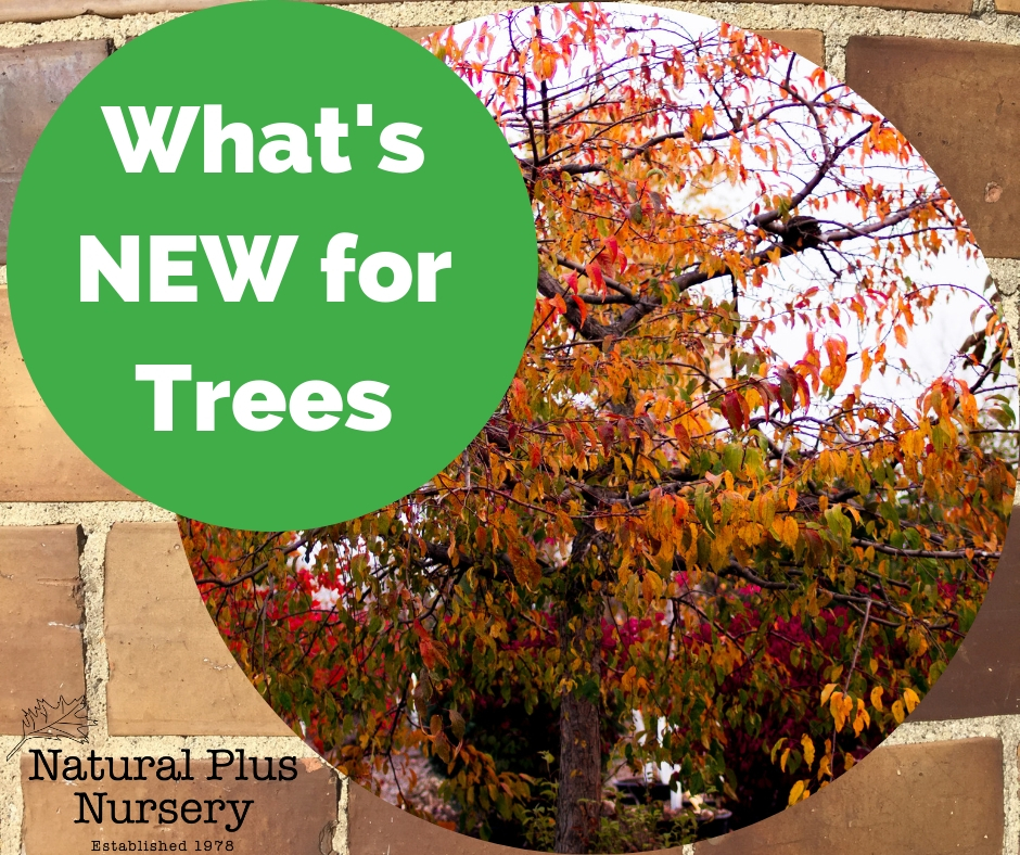 WHAT'S NEW FOR TREES.jpg