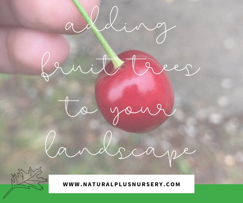 fruit tree blog.png