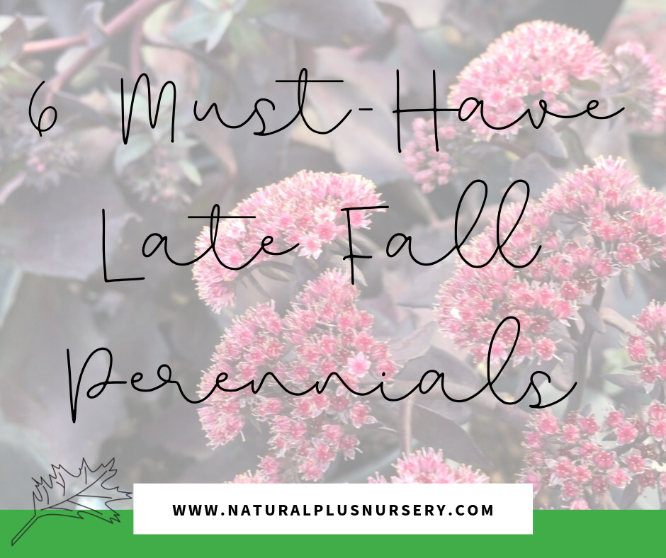 late fall perennials (2).png