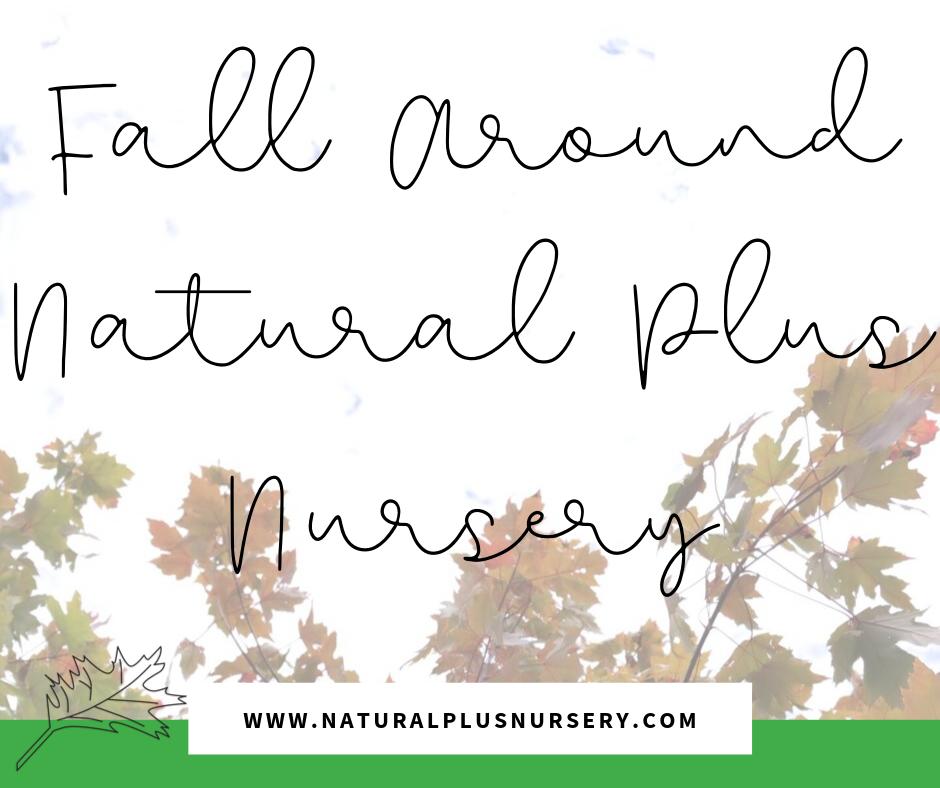 Fall Around Natural Plus Nursery