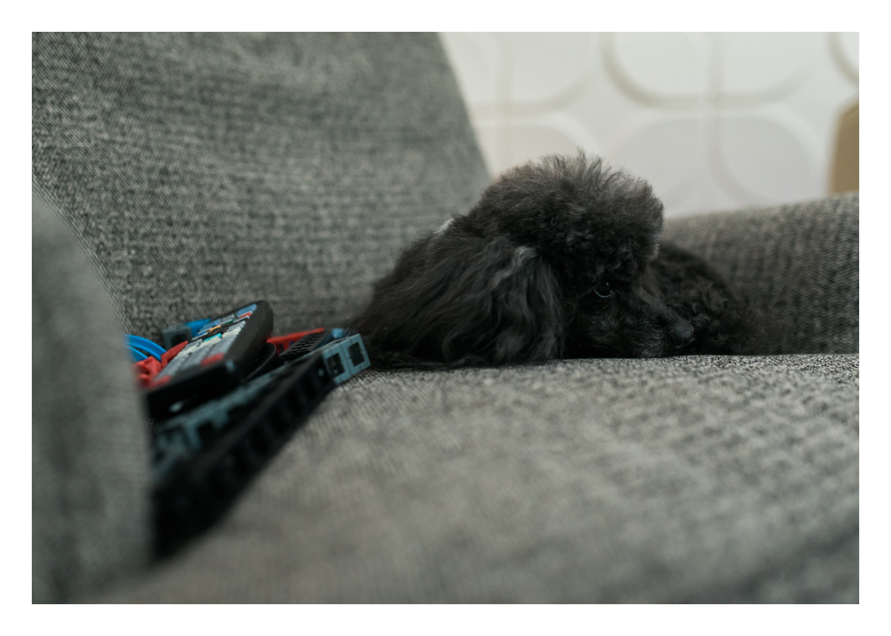 She turned 13 last week, and this is her favorite place to rest in the living room. Toys, remotes, and the like, don't bother her a bit. She just likes to be near us.
