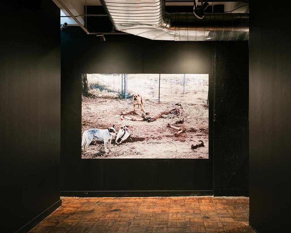 Postcommodity,Coyotaje at Art in General, New York, 2017.