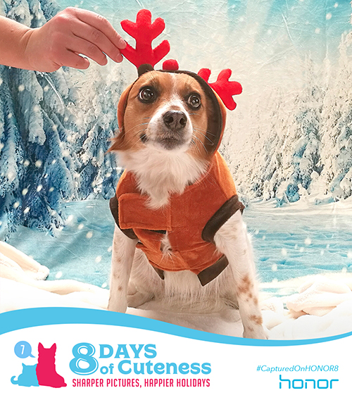 On the seventh Day of Cuteness Honor got real sad.   Our time is almost up! And what a time we've had!   Speaking of time, yes, the time is almost here!   What's that sound? Could it be?! An adorable reindeer!    Submit your cute animal pic below with    #8DaysofCuteness  for a chance to be featured on our page.  #CapturedonHonor8