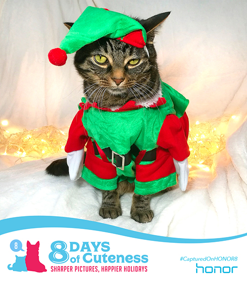 On the eighth Day of Cuteness Honor knew we had go all out. To give everyone something to smile and cheer about.   So please, share away, don't keep it to yourself.   Honor's 8 Days of Cuteness and this adorable little elf!    Submit your cute animal pic below with    #8DaysofCuteness  for a chance to be featured on our page.  #CapturedonHonor8