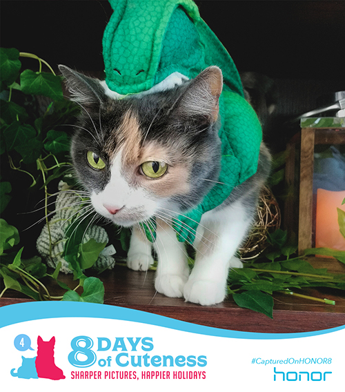 On the fourth Day of Cuteness, into the wild we went.   In search for an adorable kitty of dino descent.   Though this perfect gift was hard to capture,   We happily bring you this little Velociraptor! Submit your cute animal pic below with   #8DaysofCuteness  for a chance to be featured on our page.  #CapturedonHonor8