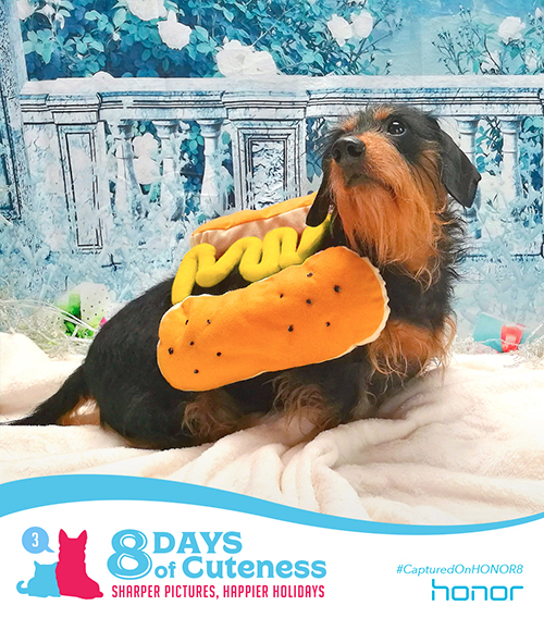 On the third Day of Cuteness Honor made it clear.   We want to make you smile from ear to ear.   So with a treat for your eyes and a treat for your mouth… Here's the sausage we've been howling about. Submit your cute animal pic below with   #8DaysofCuteness  for a chance to be featured on our page.  #CapturedonHonor8