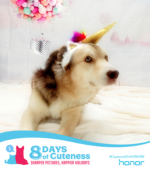 On the fifth Day of Cuteness Honor got real lucky.   We didn't even have to go to Kentucky!   We were looking for a horse, but found one with a horn.   Holy smokes! Watch out folks, it's a dang UNICORN!    Submit your cute animal pic below with   #8DaysofCuteness for a chance to be featured on our page.  #CapturedonHonor8