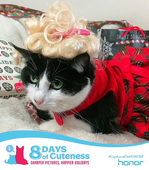 On the sixth Day of Cuteness Honor was worry free.   We took a trip to the beauty salon – then a shopping spree!   Holiday parties sure bring out the best.   This little kitty came dressed to impress!    Submit your cute animal pic below with    #8DaysofCuteness  for a chance to be featured on our page.  #CapturedonHonor8