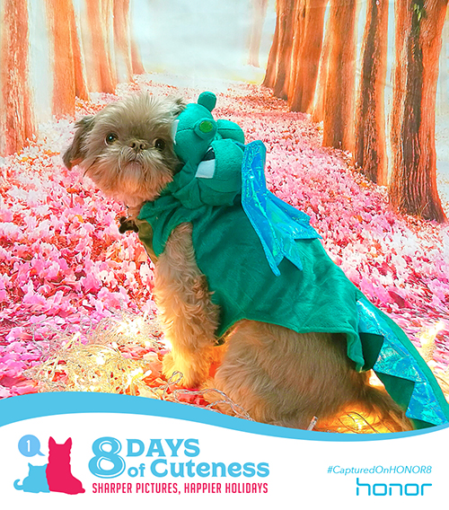 On the first Day of Cuteness Honor brought the heat.   So much cuteness, you could hardly believe!   We know it's true so we're hardly bragging.   Just take a look at this ferocious lil' dragon.   Submit your cute animal pic below with    #8DaysofCuteness  for a chance to be featured on our page.   #CapturedonHonor8