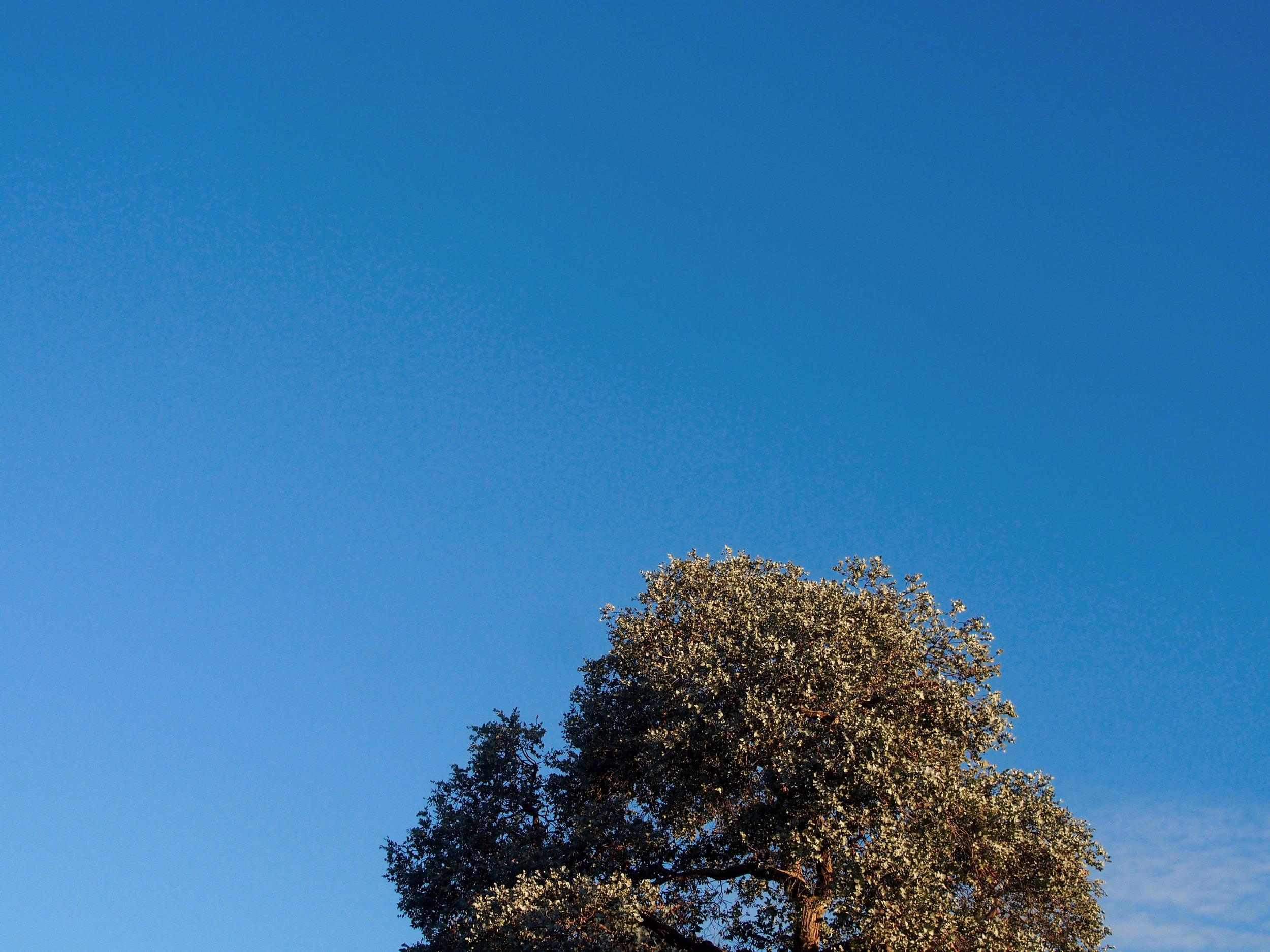 blue-sky-tree---web.jpg