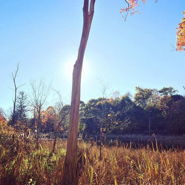 Gorgeous day at the pond this afternoon!