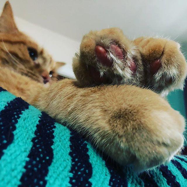 So many beautiful toes!! #waldocat #catsofinstagram