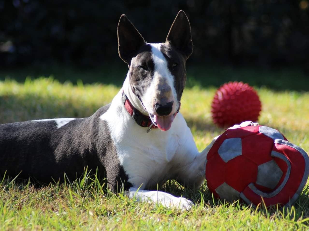 Fiona - FemaleDOB - 13.07.2017Single pet homeTeenaged kids +Hunter Region NSW