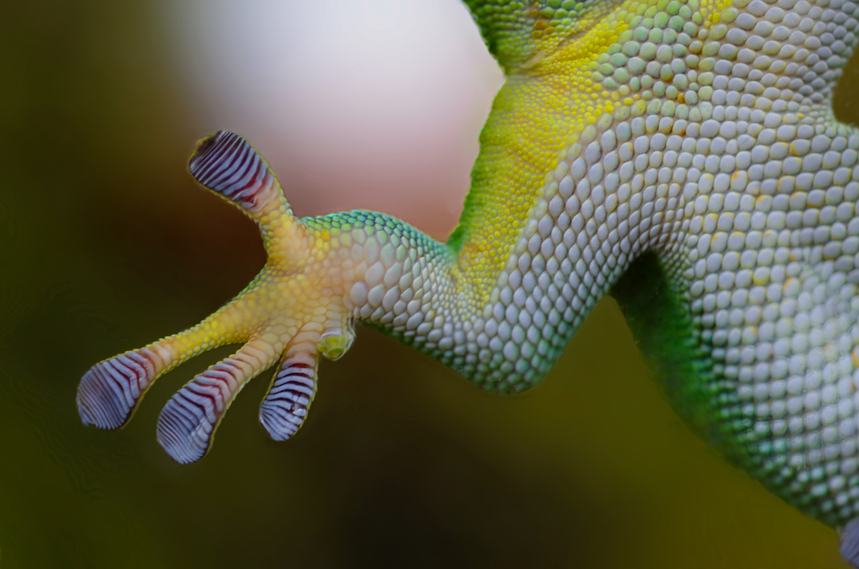 nature-hand-animal-glass.jpg