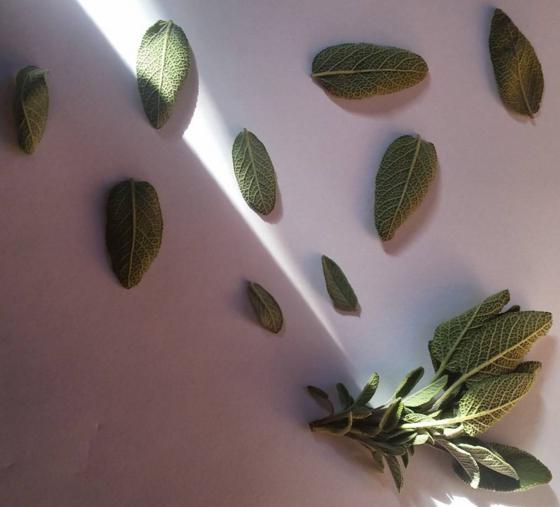 Baby Sage Leaves 2.png