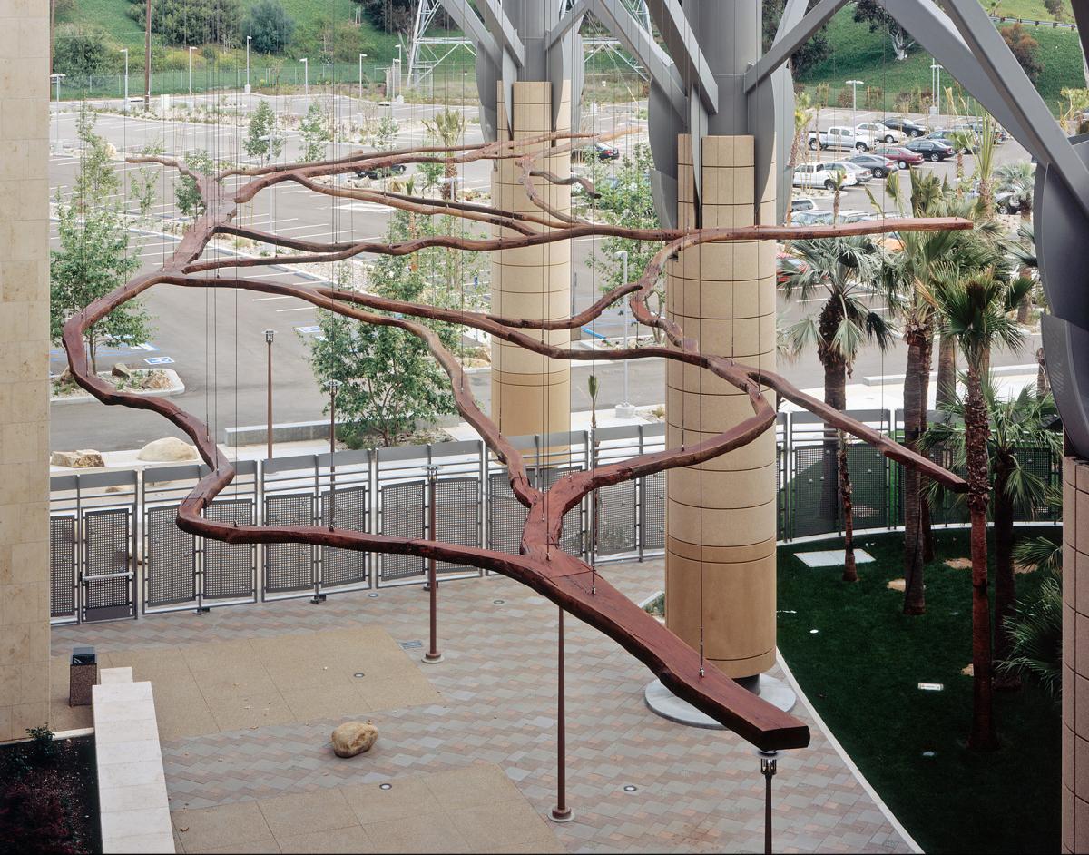Nexus Eucalyptus