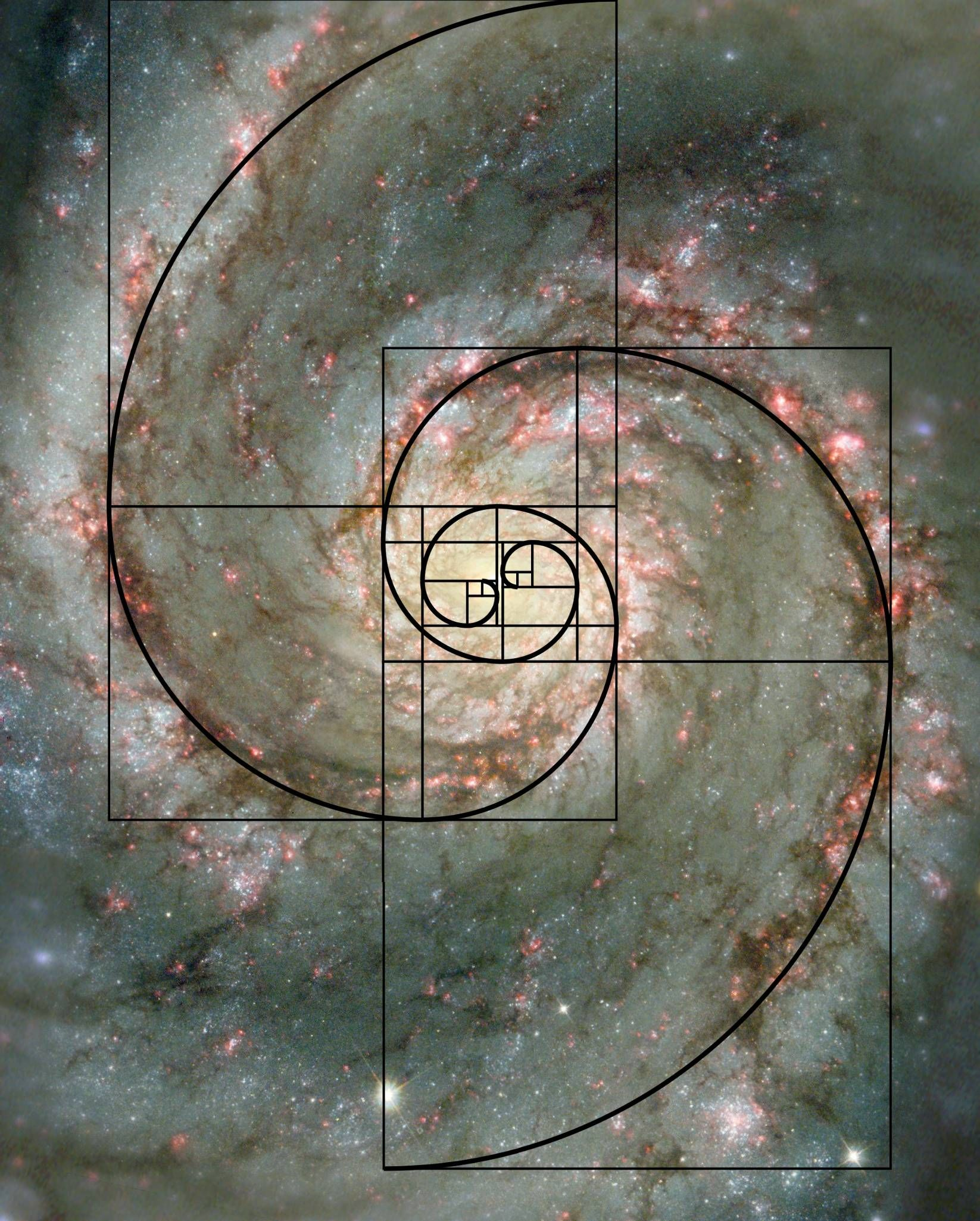 https://en.wikipedia.org/wiki/Fibonacci_number