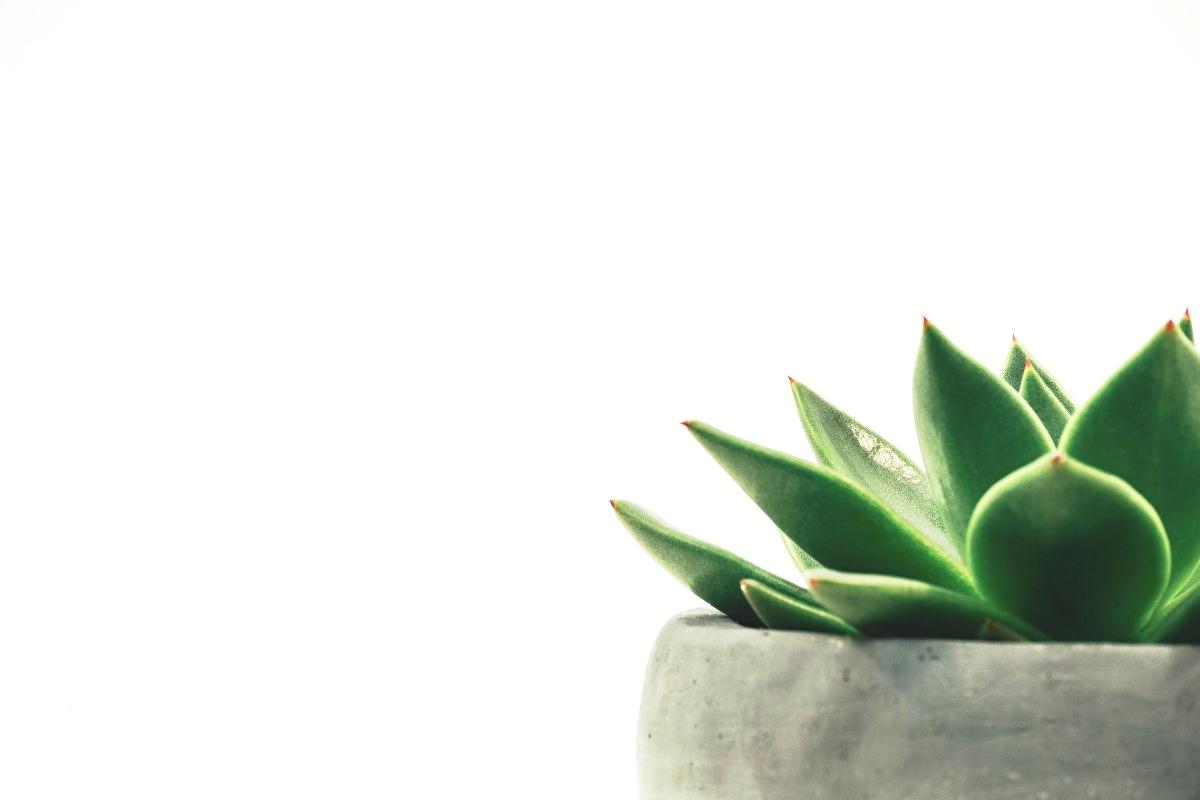 One Week - Go Green -