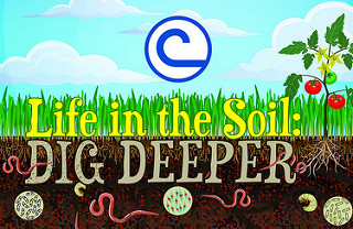life in the soil.jpg