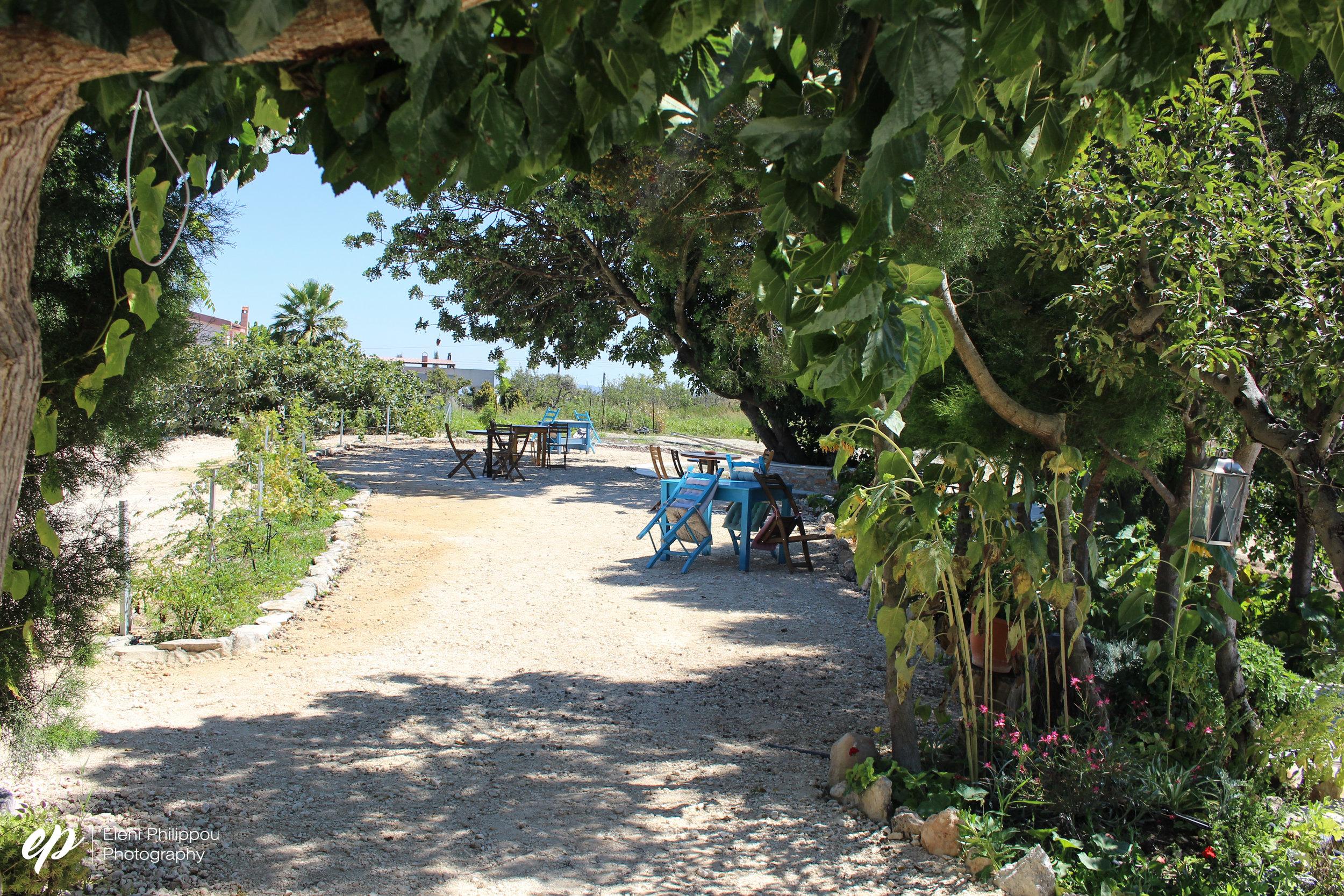 the garden at Kika's Garden in Paphos