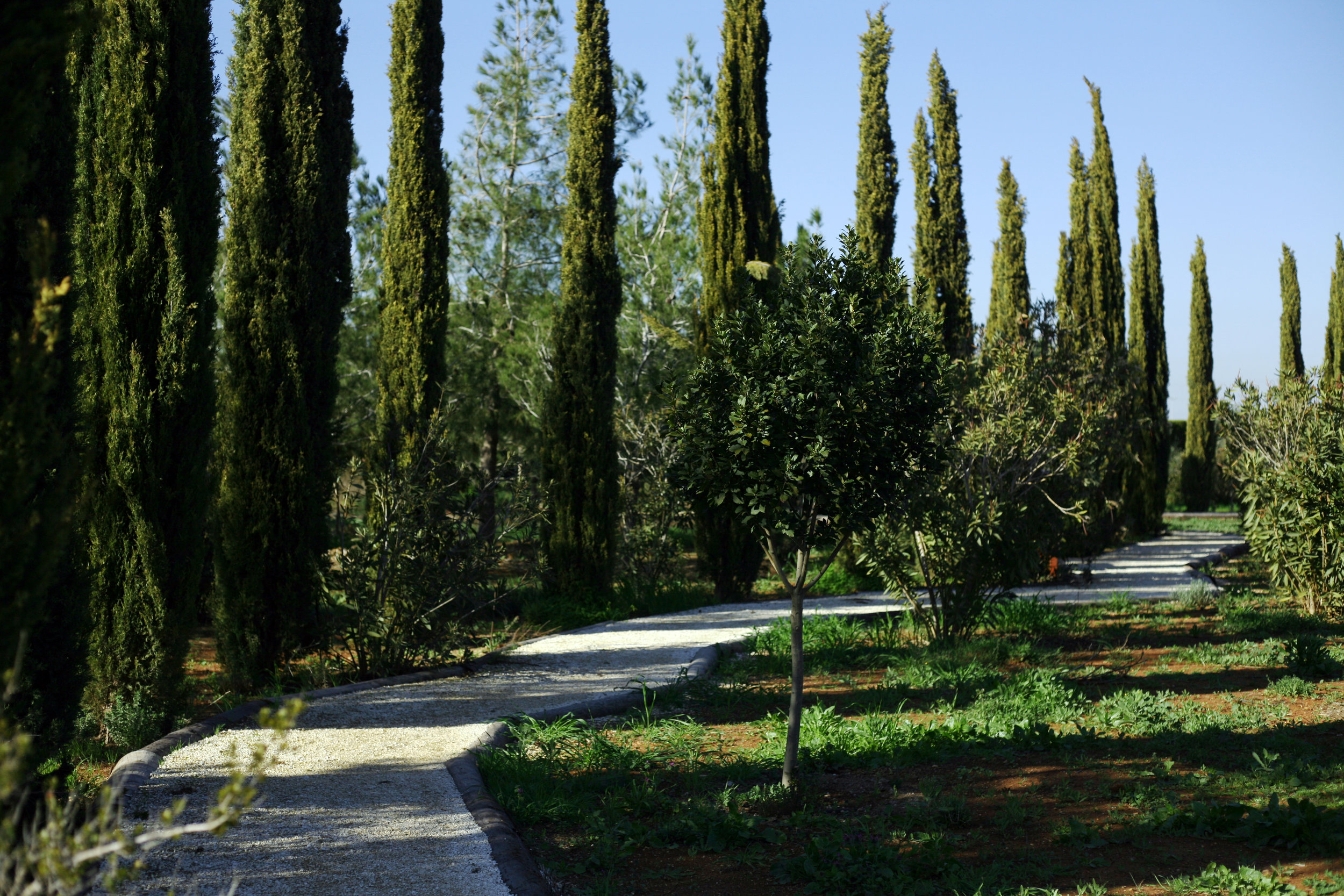 Cypress trees form a walking path taking visitors around the garden | © CyHerbia