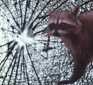 RaccoonRebel-e1456062993442.jpg