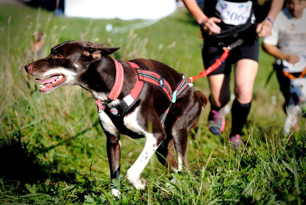 Cushla dog running 2_preview.jpg