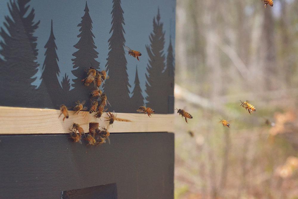 1dedd-bees_3.jpg