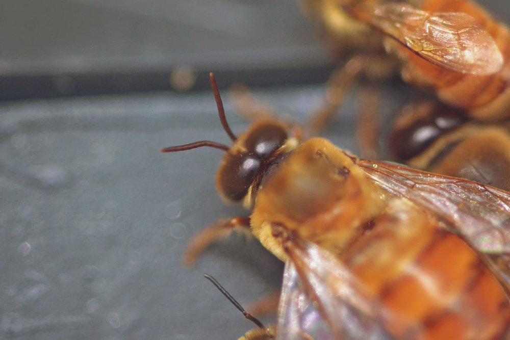 e0398-bees_6.jpg