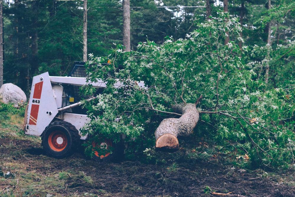 07ddc-090518_treecutting_15.jpg
